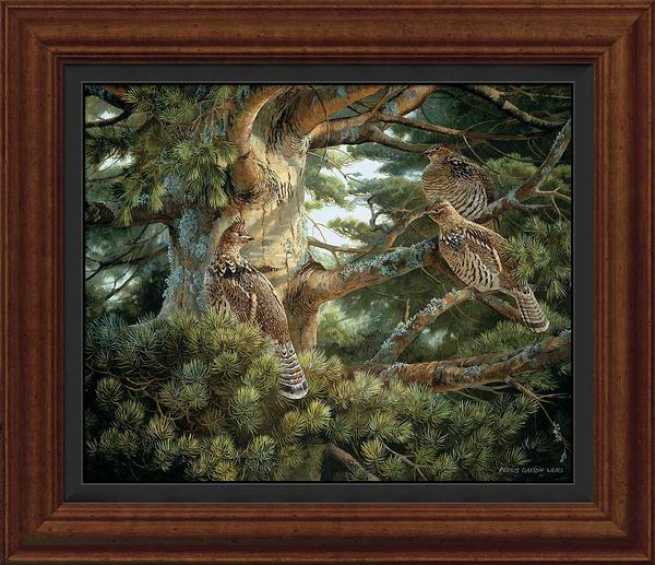 Sunlit Pine-Ruffed Grouse Art Collection