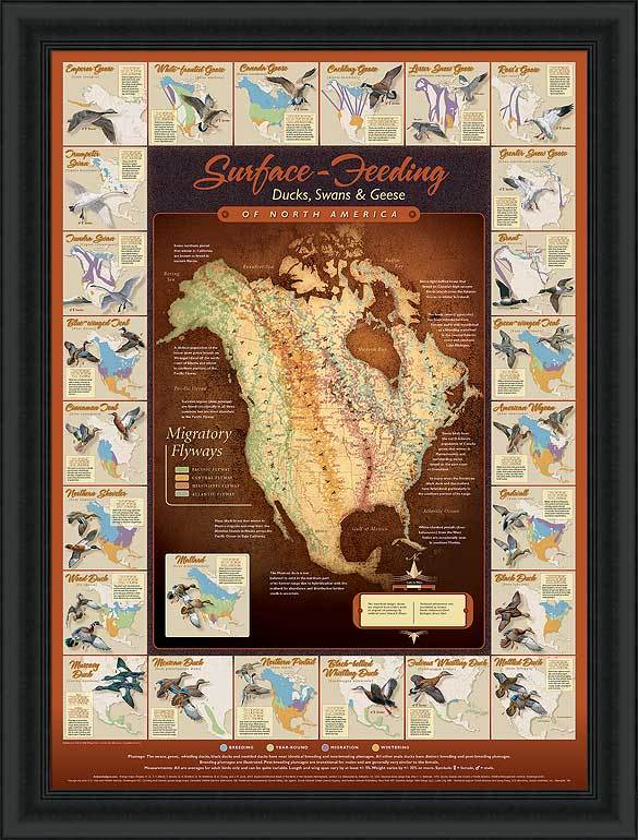 Migration Map Framed Limited Edition Print