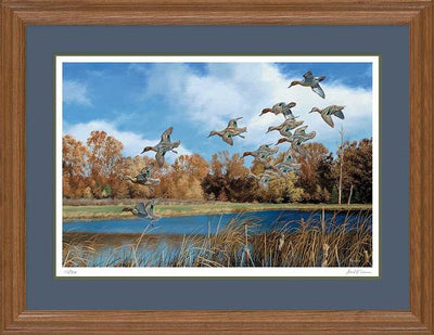 Swift Approach-Ducks Art Collection