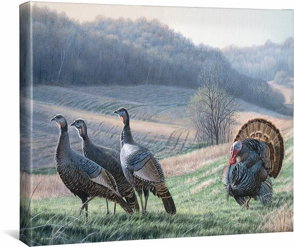 <i>Tempting Trio&mdash;Turkeys</i>