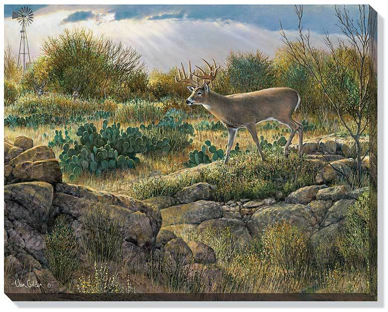 Texas Gold—Whitetail Deer.