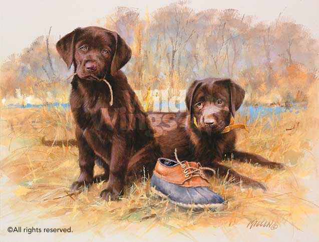 That's My Puppy—Chocolate Labs.