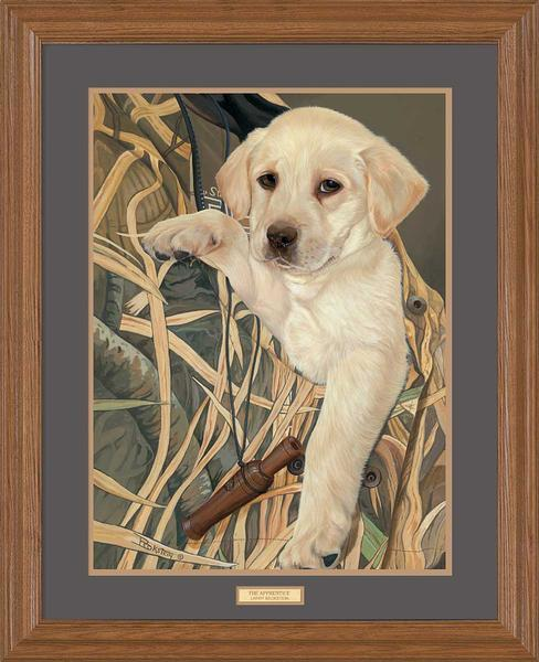 The Apprentice—Yellow Lab.