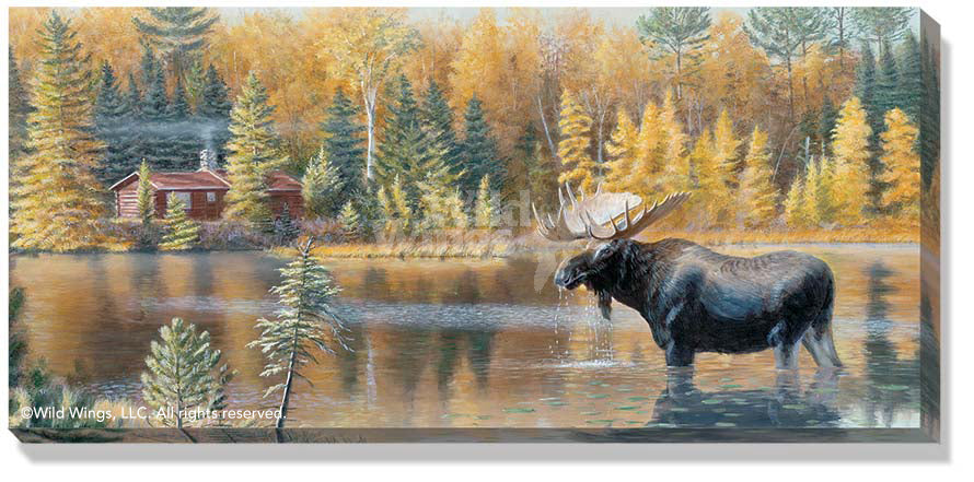 The Loner-Moose Art Collection