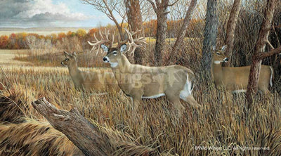 <I>The Missouri Giant&mdash;deer</i> Limited Edition Print<Br/>15H X 27W Art Collection