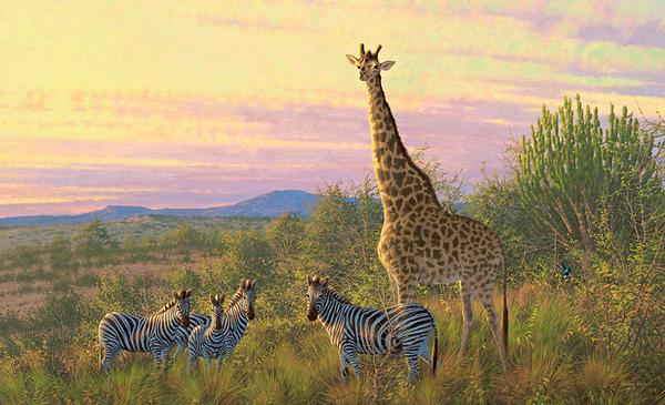 The Watch Tower—Giraffe & Zebras.