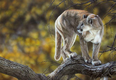 &Then She Was Gone—Mountain Lion.
