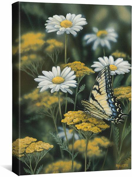 <I>Tiger Swallowtail Butterfly</i> Gallery Wrapped Canvas