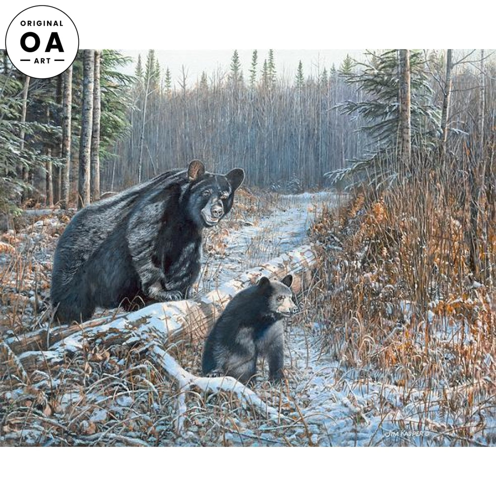 Time to Hibernate—Black Bears.