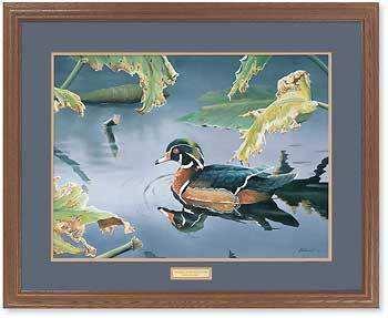 <I>Tranquil Pond&mdash;wood Duck</i> Gna Premium Framed Print<Br/>25H X 31W Art Collection