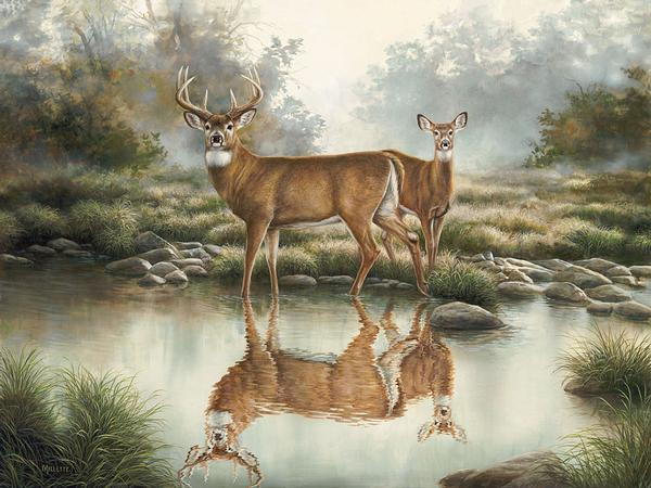 Tranquil Waters-Whitetail Deer Art Collection