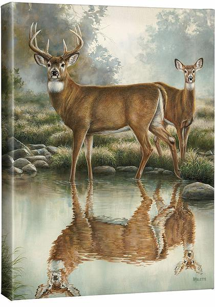<I>Tranquil Waters&mdash;whitetail Deer</i> Gallery Wrapped Canvas