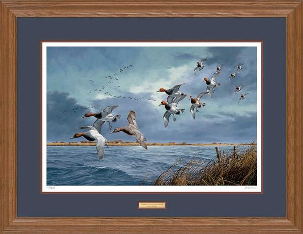Turbulence Over Delta Marsh-Canvasbacks Art Collection