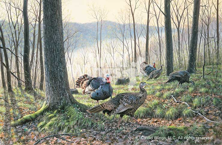 Spring Fever-Turkeys Art Collection