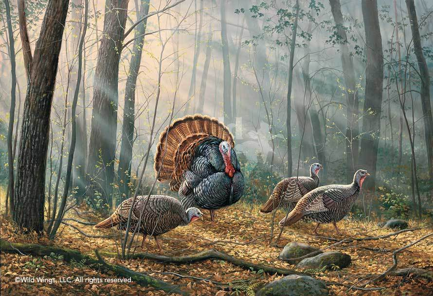 Woodland Splendor—Turkeys