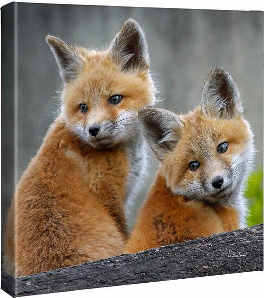 <I>Two Cute&mdash;fox Kits</i> Gallery Wrapped Canvas