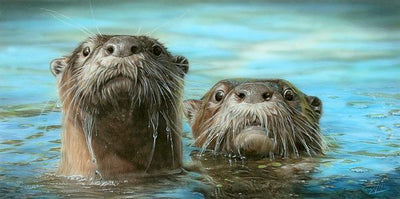 Up Periscope Too—American River Otters.