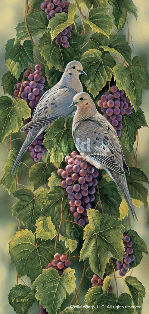 Vineyard-Mourning Doves Art Collection