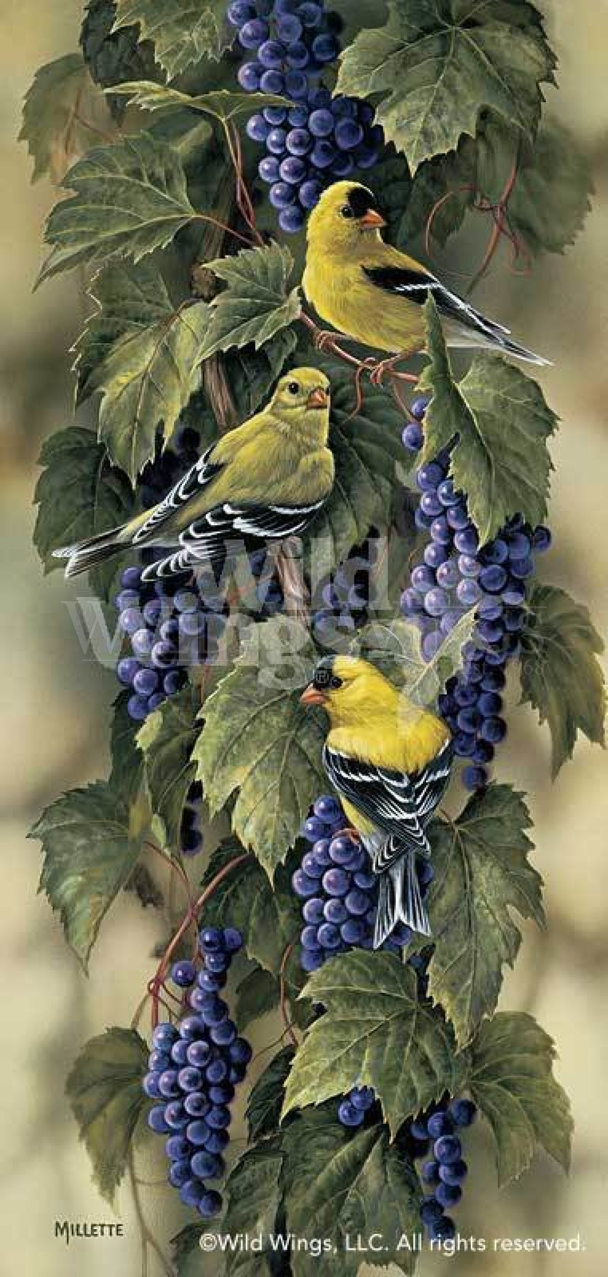 <I>Vineyard&mdash;goldfinch</i> Limited Edition Print<Br/>21H X 10W Art Collection
