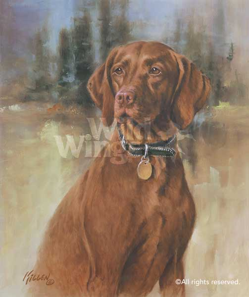 That's My Dog, Too! - Vizsla Art Collection