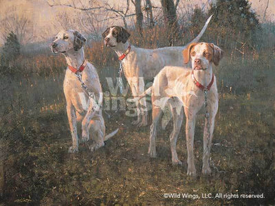 Waiting to Run—English Pointers.