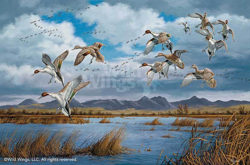 Waterfowling Hot Spots—Pintails