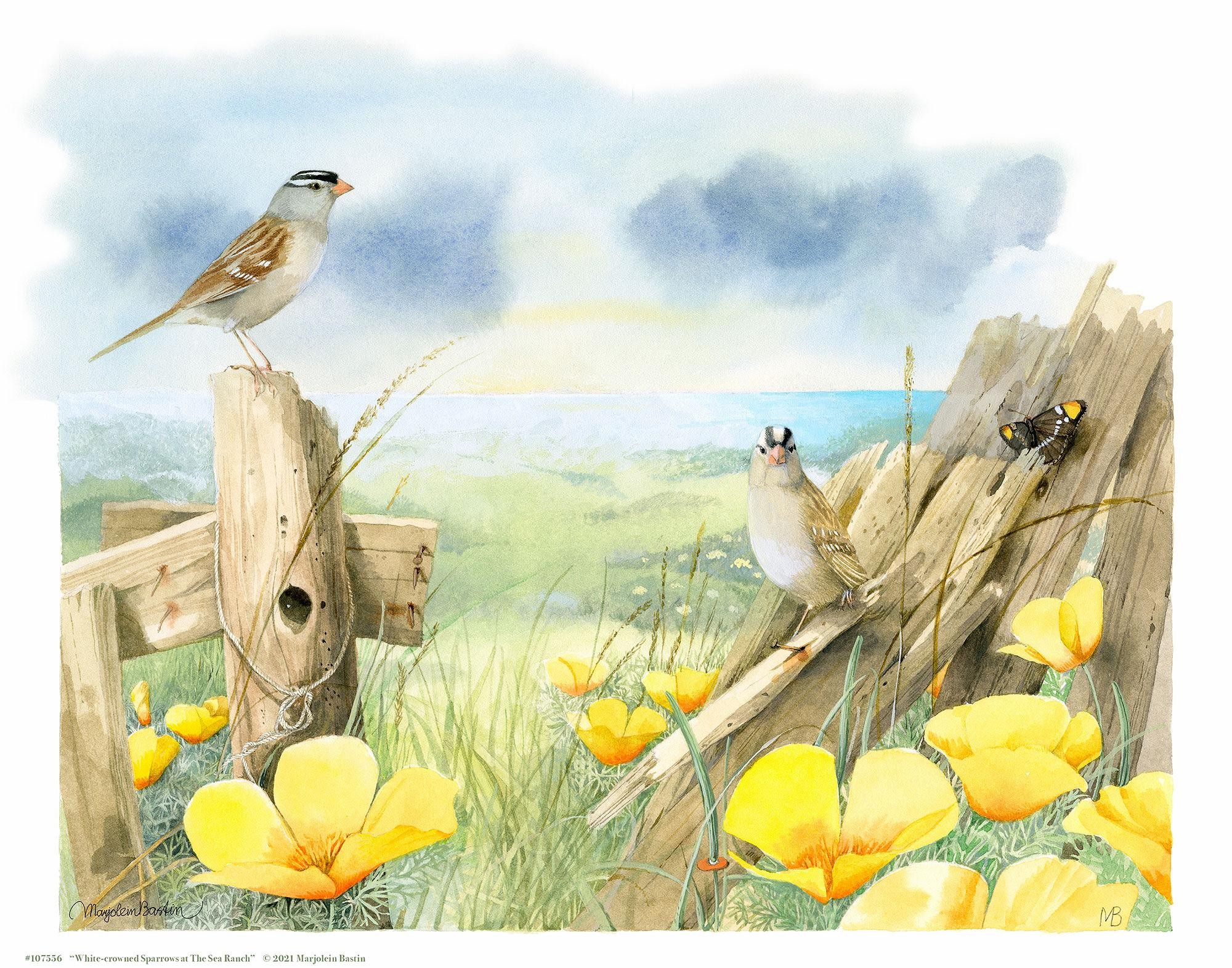 White Crowned Sparrows at Sea Ranch Art Collection