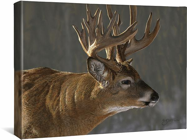 <I>Whitetail Buck</i> Gallery Wrapped Canvas
