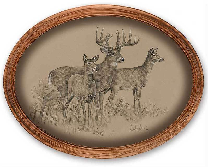 Whitetail Deer Oval Framed Canvas Oval