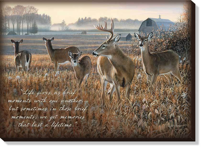 Meadow Magic—Whitetail Deer.