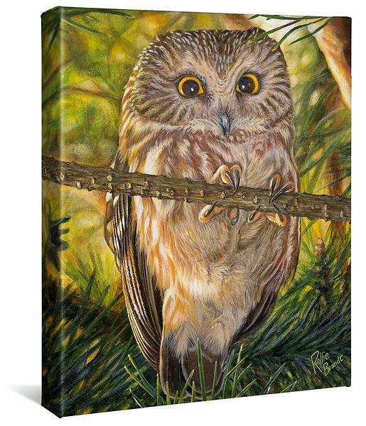 <I>Who Me&mdash;northern Saw-Whet Owl</i> Gallery Wrapped Canvas