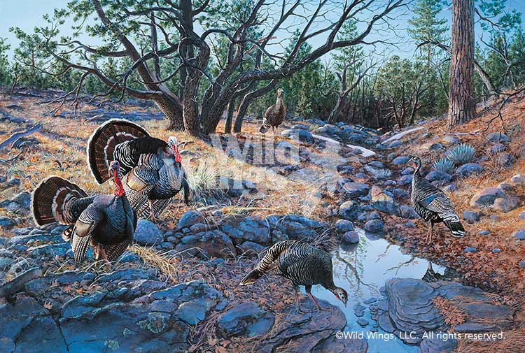 <i>Western Ritual&mdash;Turkeys</i>