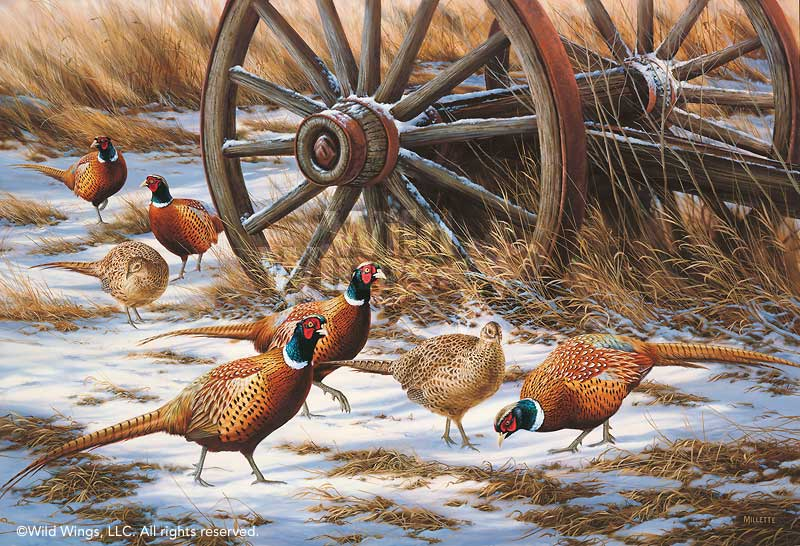 Winter Rendezvous-Pheasants Art Collection