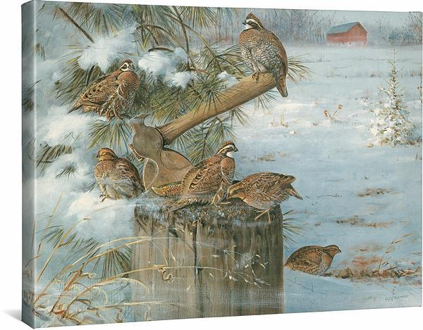 <I>Wintering Quail</i> Gallery Wrapped Canvas