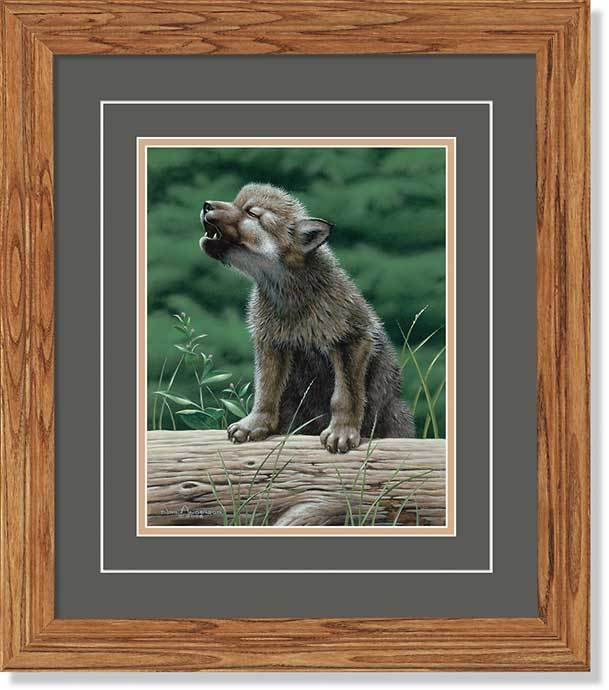 <I>Wolf In Training&mdash;timberwolf</i> Gna Deluxe Framed Print<Br/>18.5H X 16.25W Art Collection