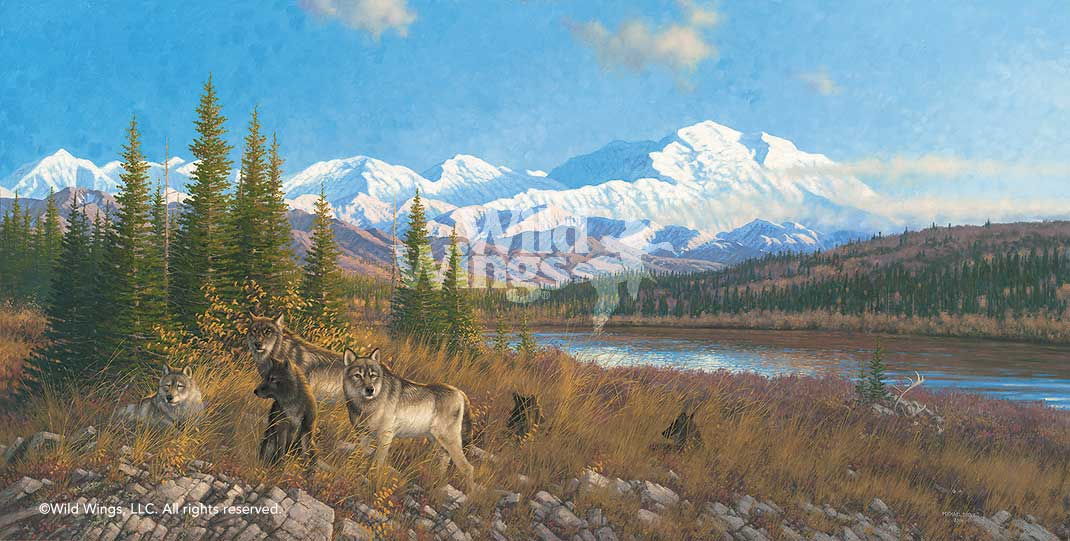 Denali Six Pack-Wolves Art Collection