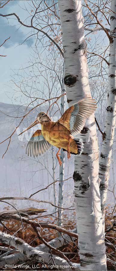Climbing High-Woodcock Art Collection