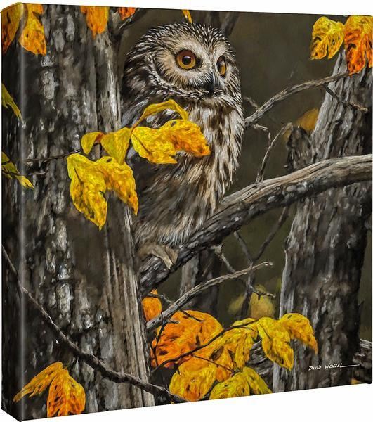 <I>Woodland Saw-Whet</i> Gallery Wrapped Canvas