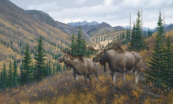 Working The Ridge&mdash;moose Limited Edition Print<Br/>18H X 30W Art Collection