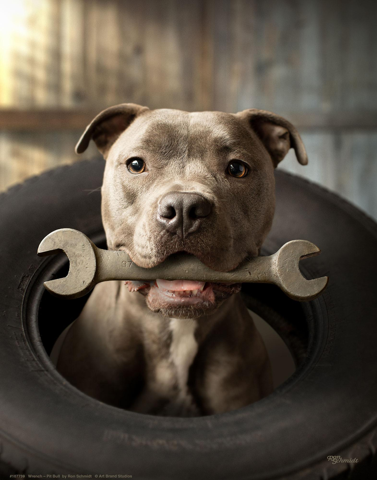 Wrench-Pitbull Terrier Art Collection