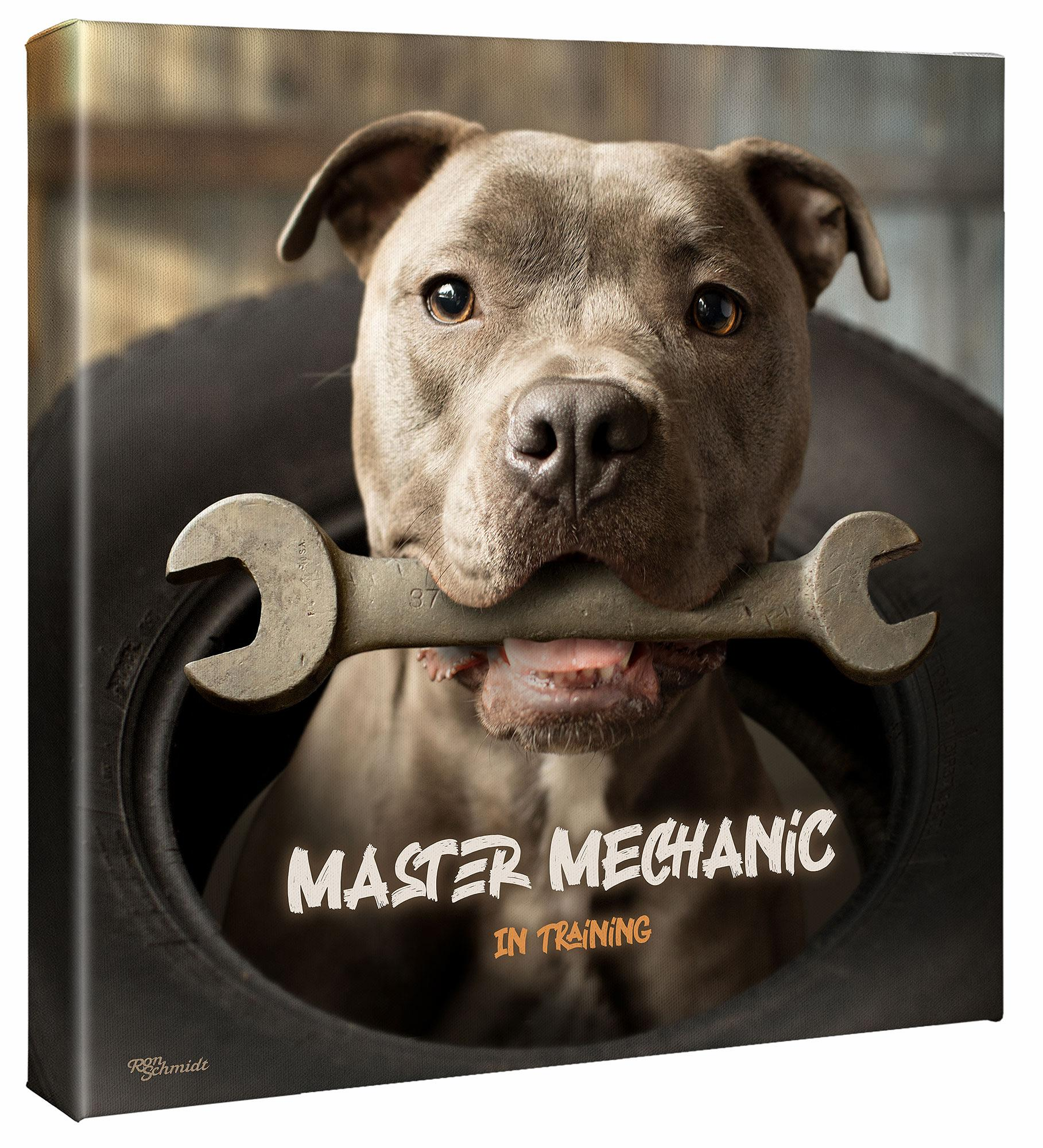Wrench—Pitbull Terrier.