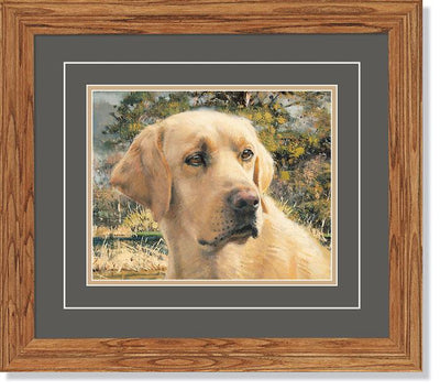 Flash—Yellow Lab Dog.