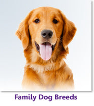 Family Dog Breeds
