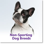 Non-Sporting Dog Breeds