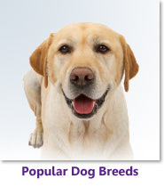 Popular Dog Breeds