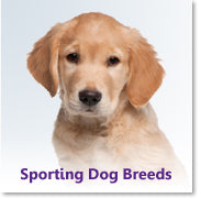 Sporting Dog Breeds