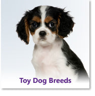 Toy Dog Breeds