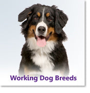 Working Dog Breeds
