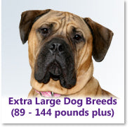 Extra Large Dog Breeds