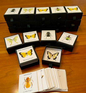 NC Insects Memory Game